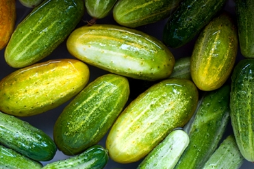 Dill-Pickles-Main-Photo