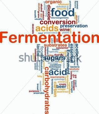 fermentation-food-process