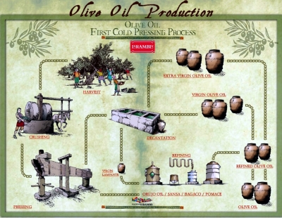 OliveOilProduction