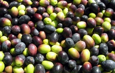 olives raw