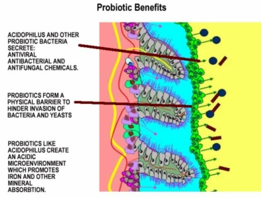 probiotic-benefits