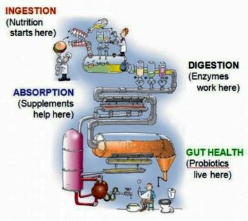 probiotic machine