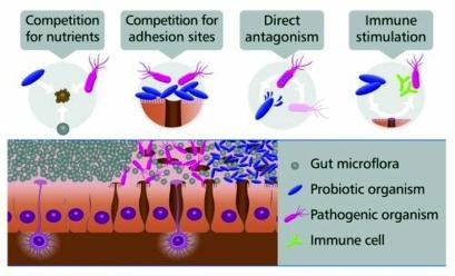 probiotics_mechanisms_of_action