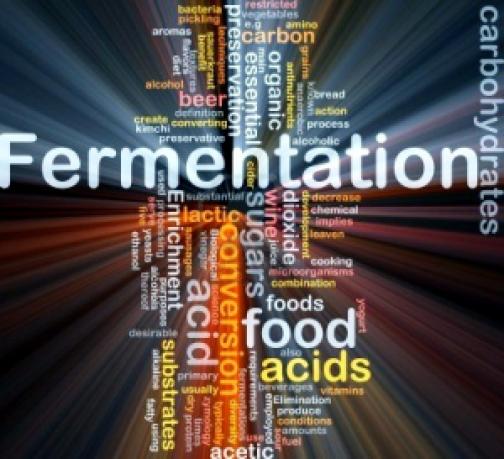 wordcloud-illustration-of-fermentation